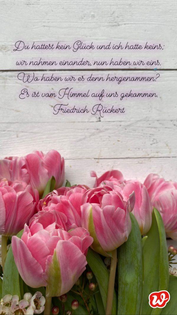 Rosa Tulpen mit Liebeszitat
