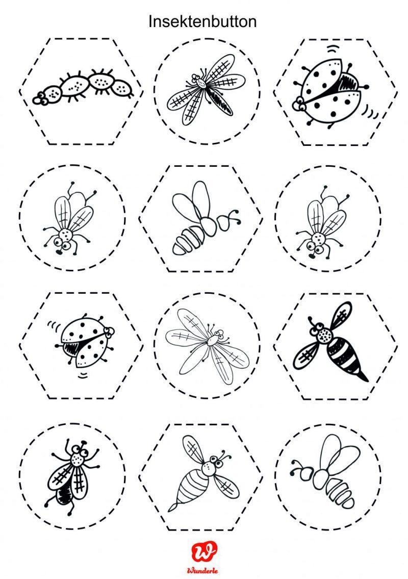 Wunderle Freebie Insekten