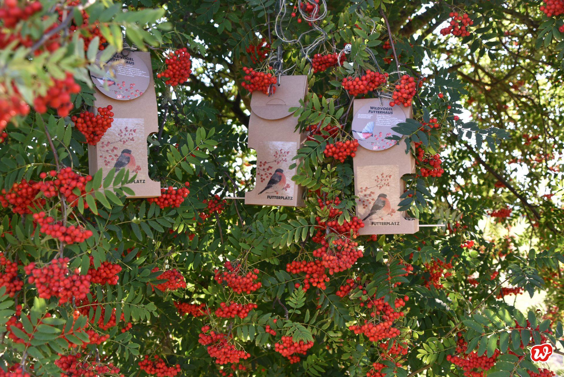 3 Wildfuttervogelhäuser Futterplatz in saftig roten Vogelbeeren