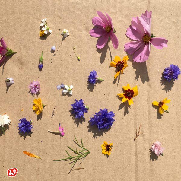 Kunterbunte Blüten auf Kartonage
