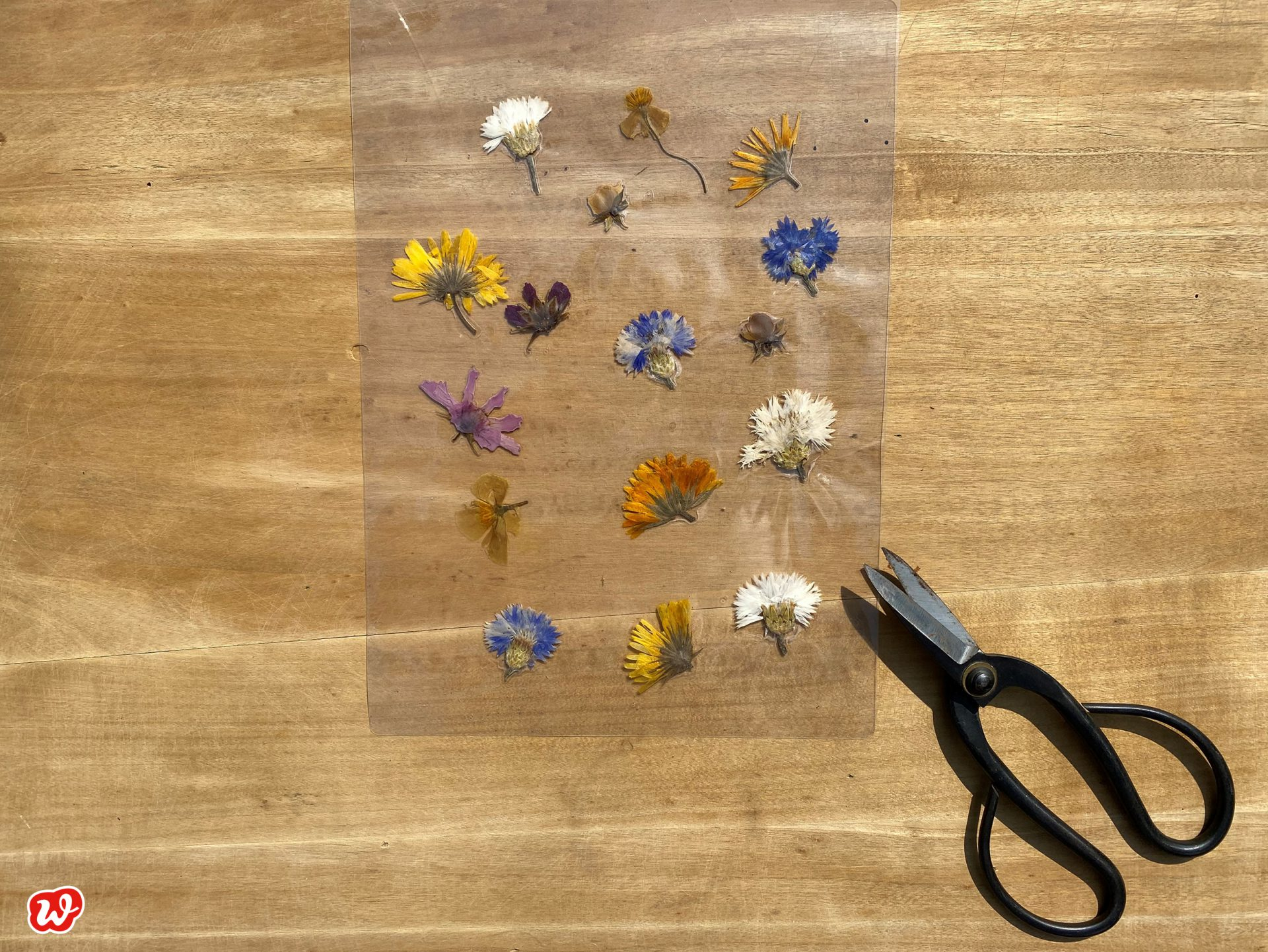 DIy laminierte Trockenblumen