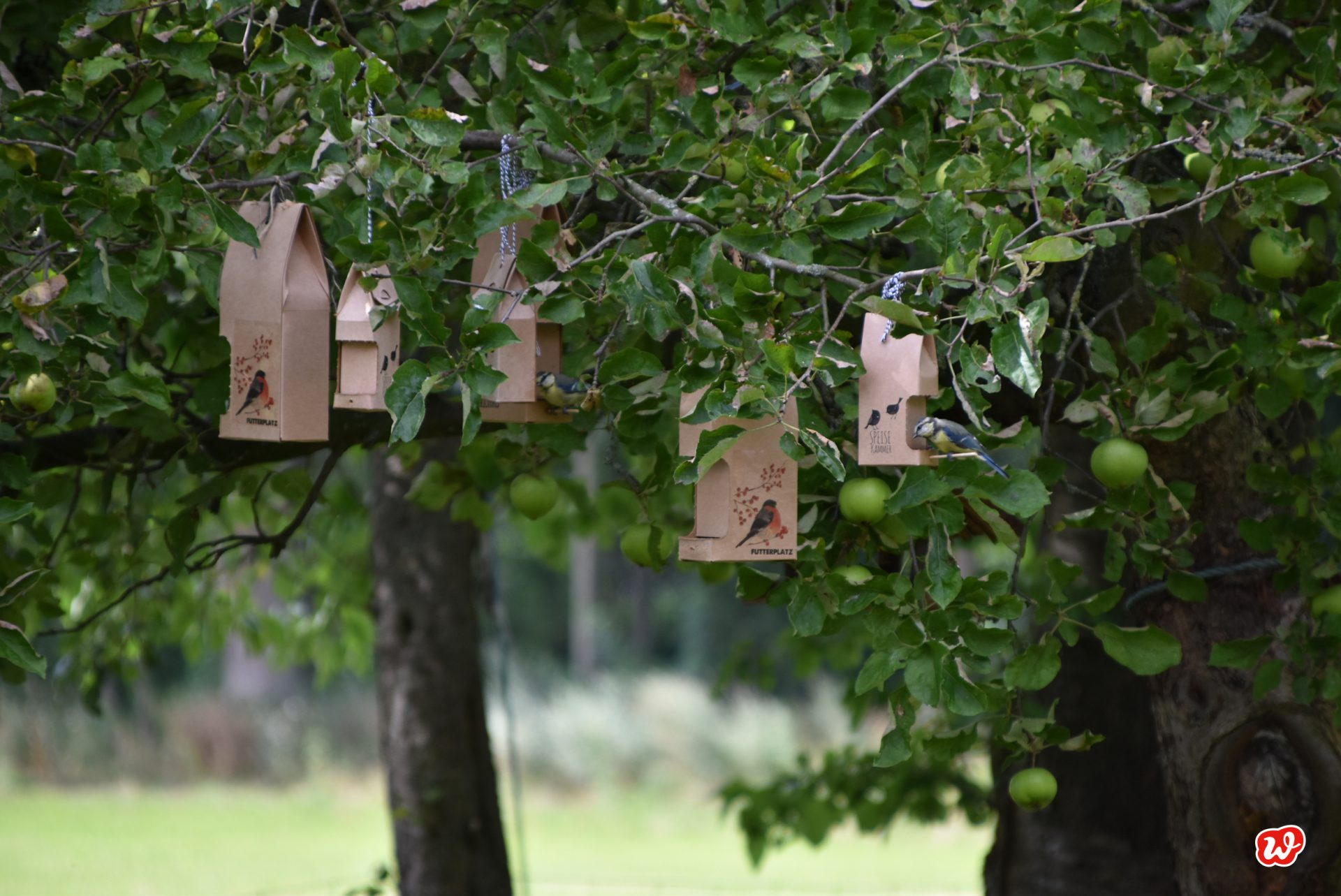 Wunderle Wildvogelfutterhäuser in Apfelbaum