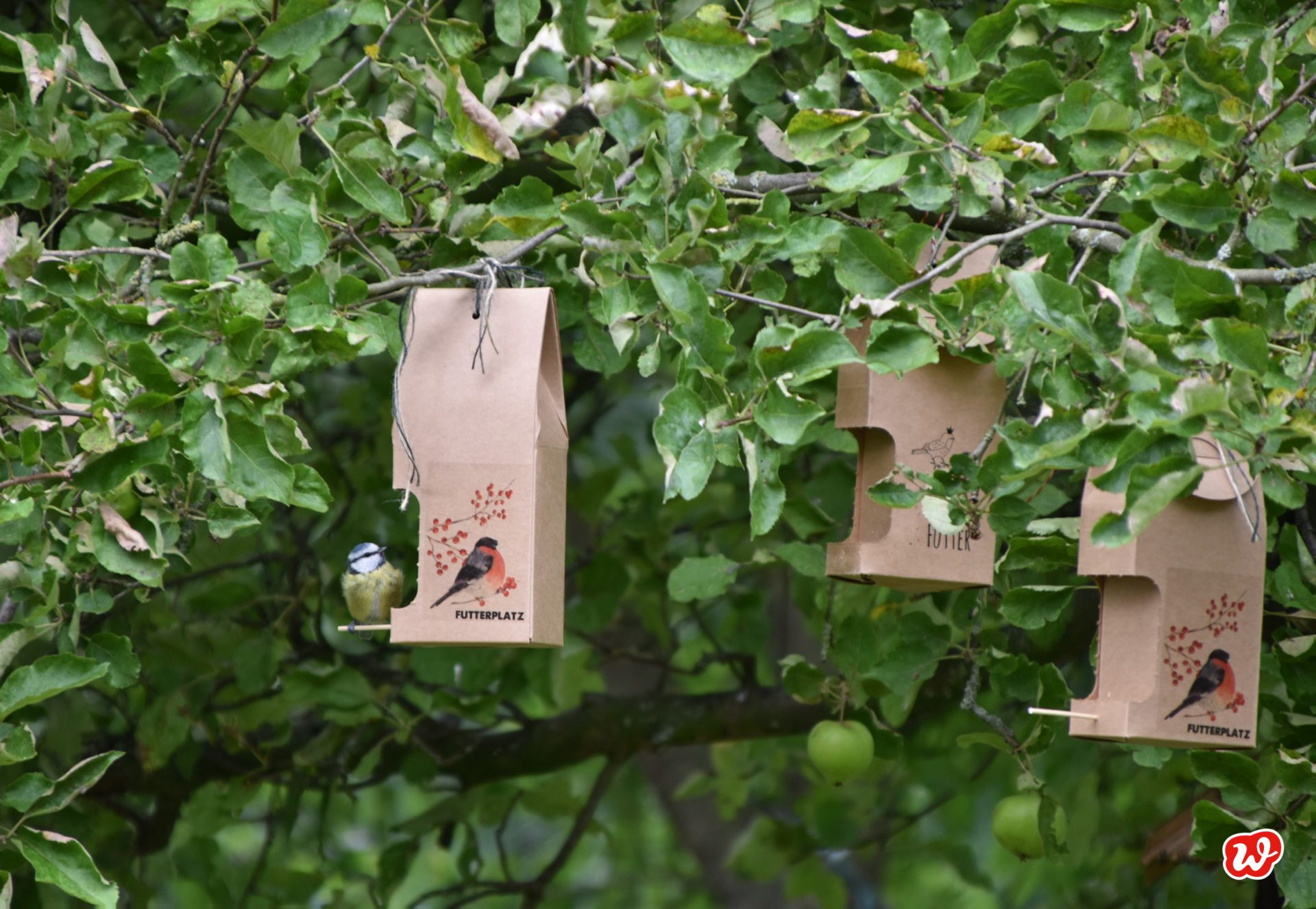 Wunderle Wildvogel Futterhaus mit Meise