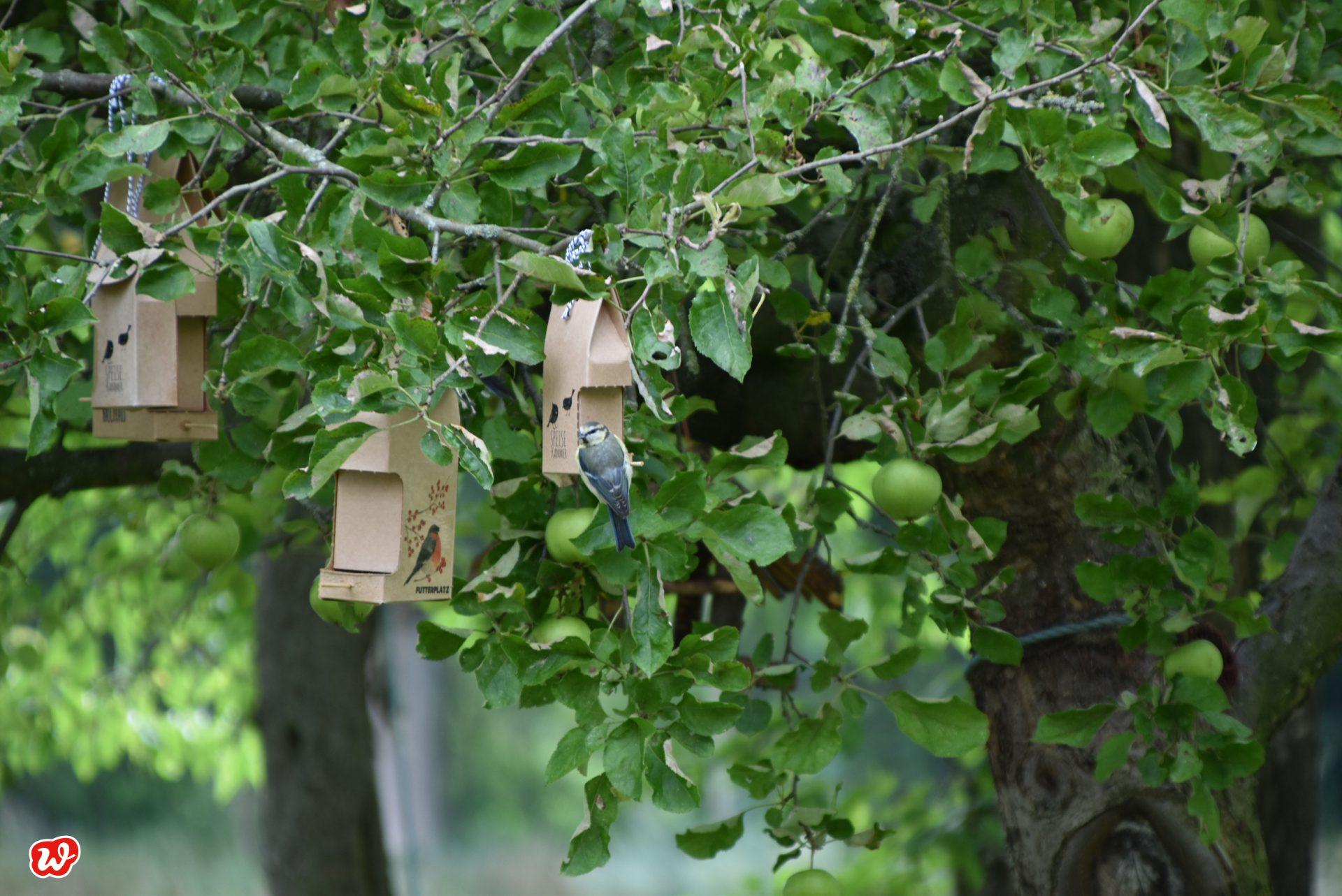 Wunderle Wildvogelspeisekammern in Baum mit Meisen